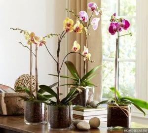 Орхидея — уход в домашних условиях