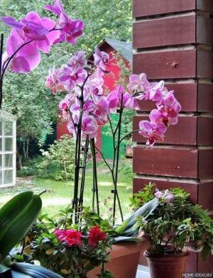 Орхидея — уход за цветком на даче