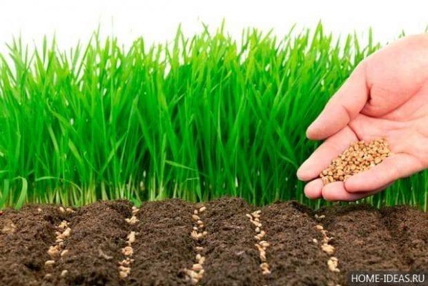 Cидераты: когда их сеять и когда закапывать?
