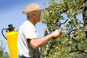 Обработка плодовых деревьев от вредителей весной